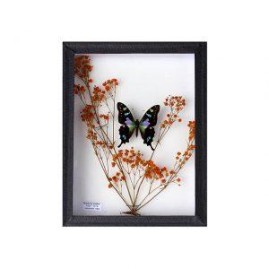 Papillon Graphium Weiskei et Gypsophile orange H23 x H18