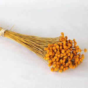 Botao Orange fleurs séchées
