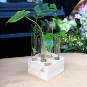 Boutures dans Fioles en verre sur support en bois carré
