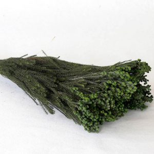 Lanuginosa verte fleurs séchées