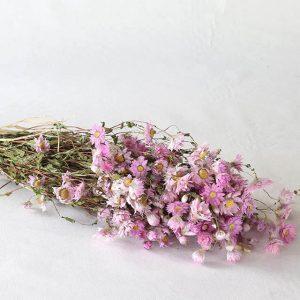 Rodanthe rose fleurs séchées