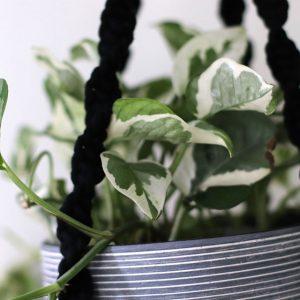 Suspension macramé noire Pots Gris