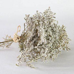 Tatarica fleurs séchées